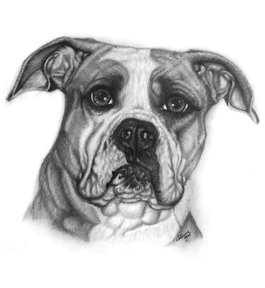 Pencil Dog Portrait 7