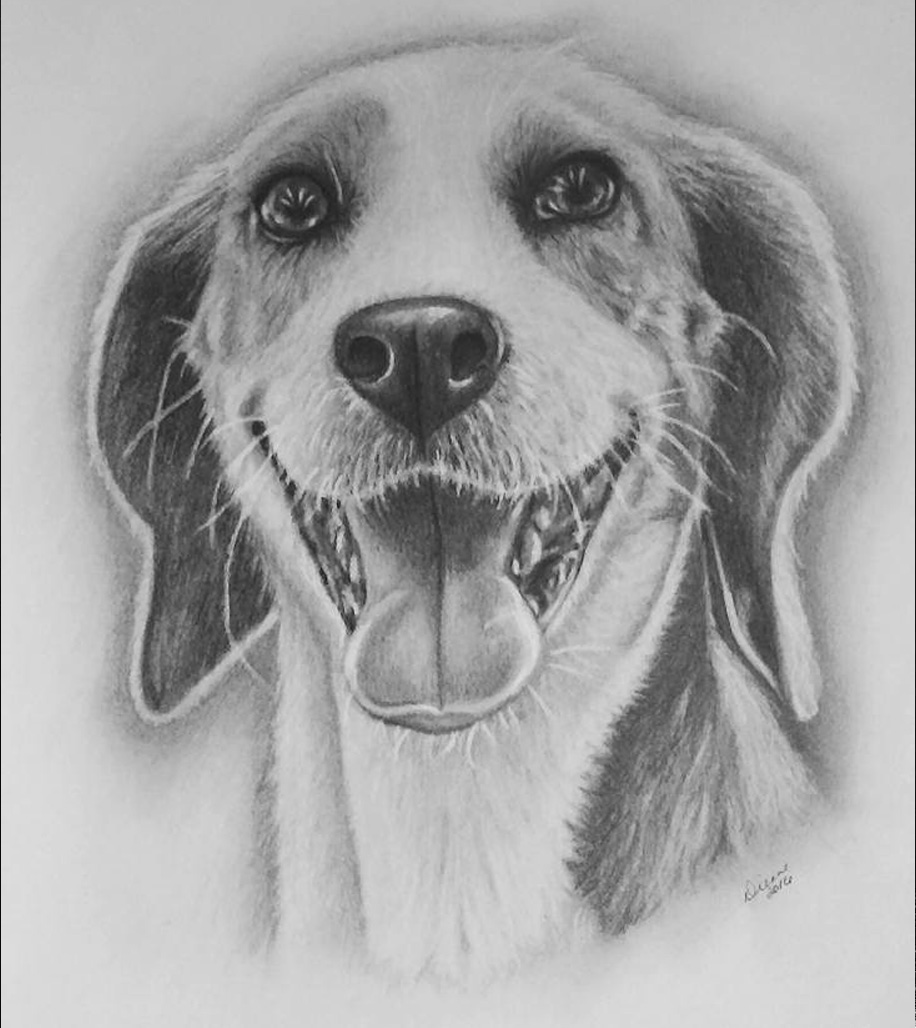 Dog Pencil Portrait 4