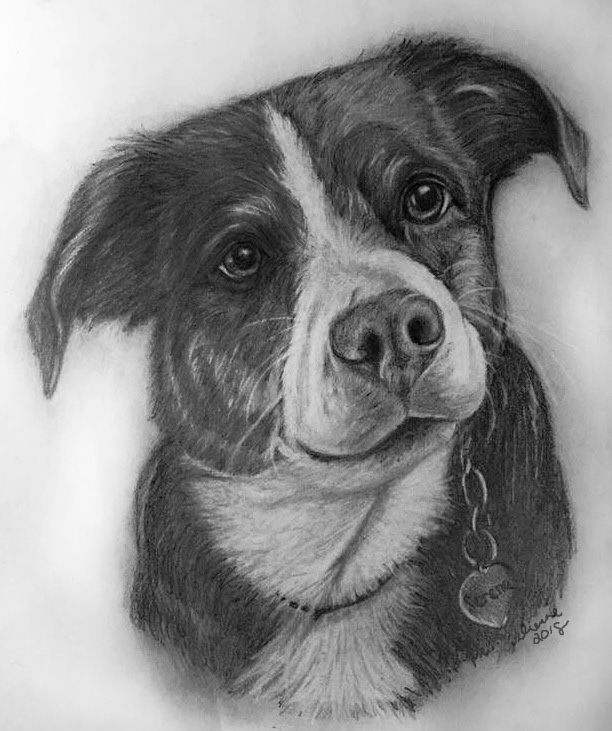 Pencil Dog Portrait 10