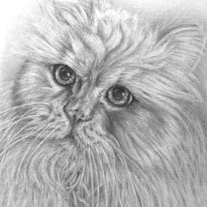 Pencil Cat Portrait 4