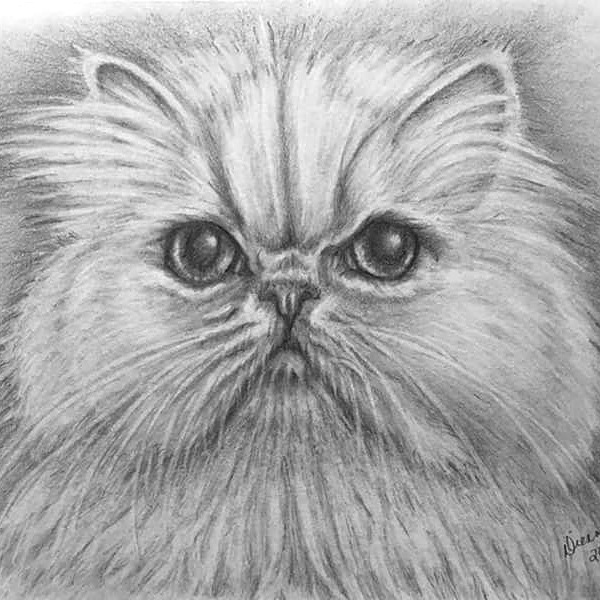 Pencil Cat Portrait 5