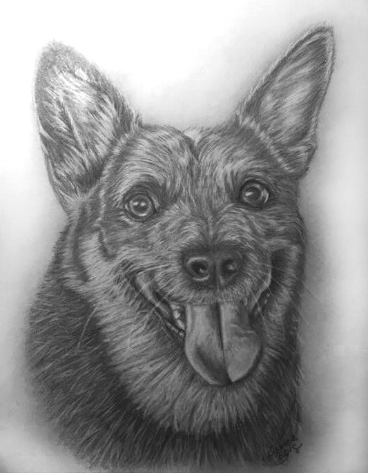 Pencil Dog Portrait 9