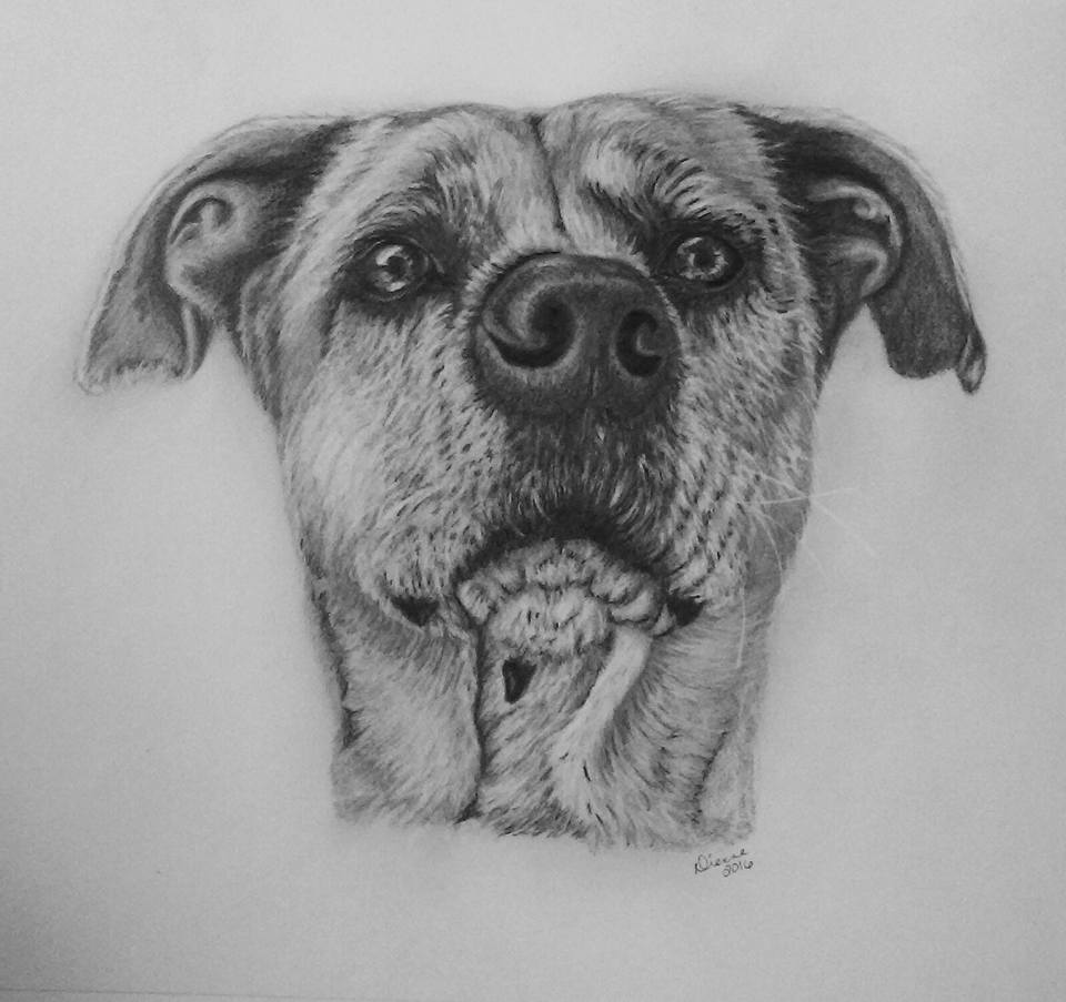 Pencil Dog Portrait 6