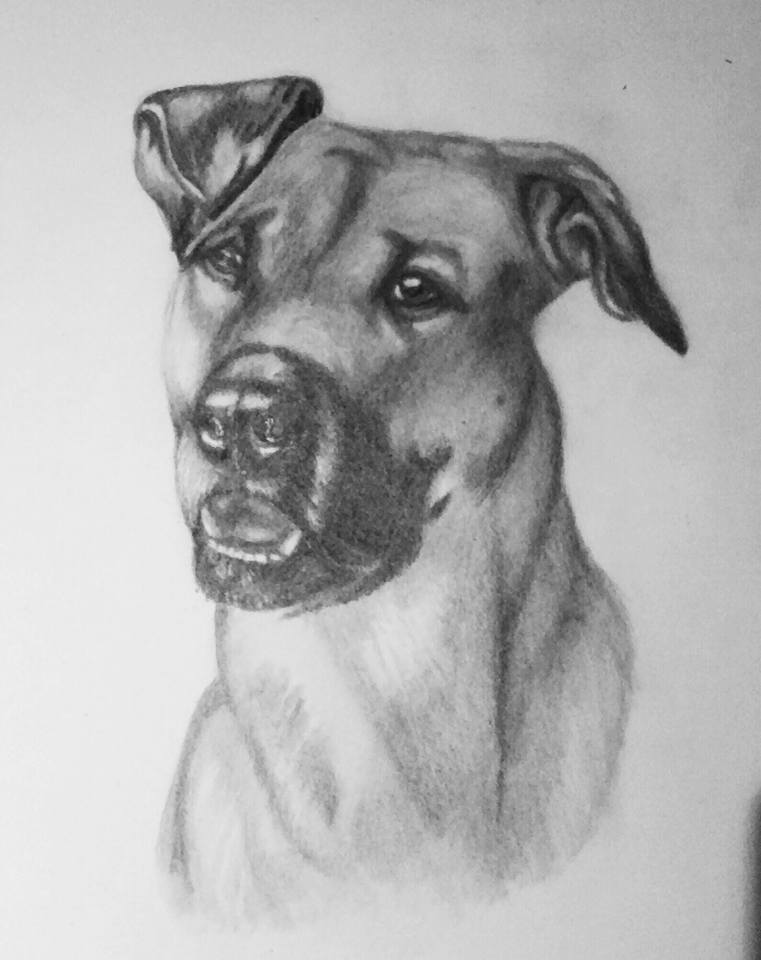 Pencil Dog Portrait 5