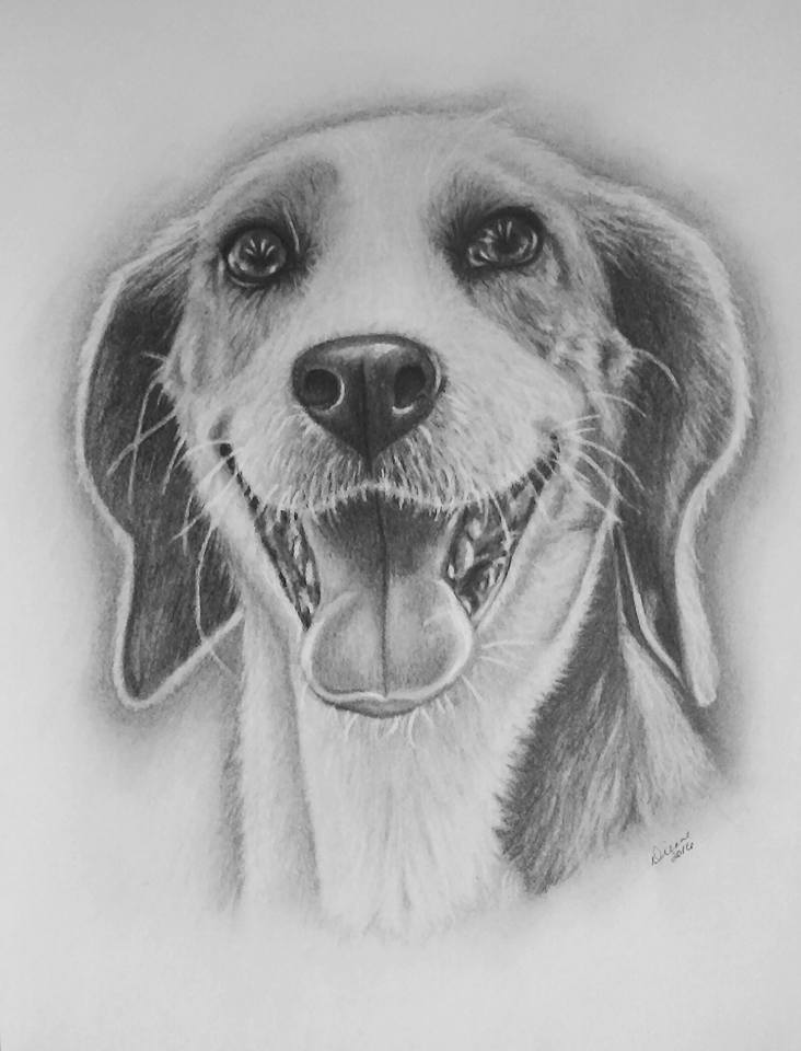Pencil Dog Portrait 1