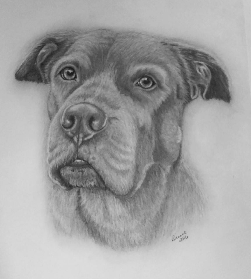 Pencil Dog Portrait 2