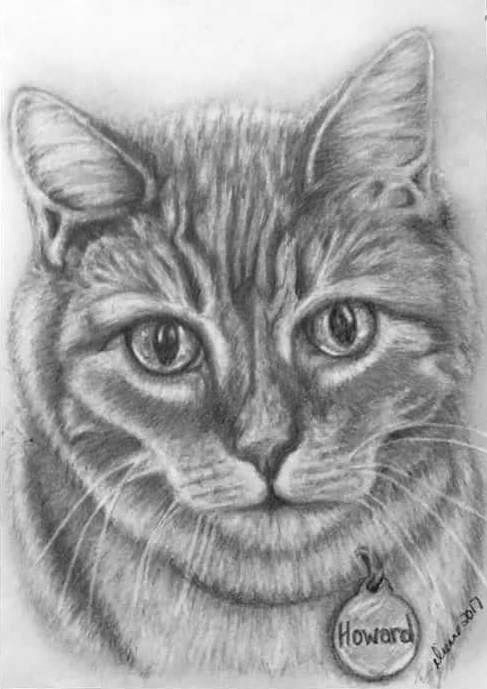 Pencil Cat Portrait 6