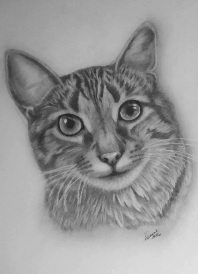 cat Pencil Portrait 1