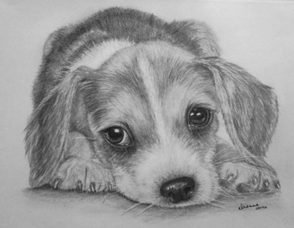 Pencil Portrait Puppy