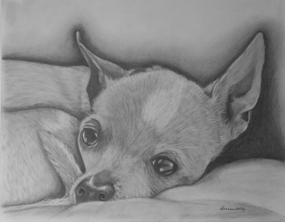 Pencil Puppy Portrait 3
