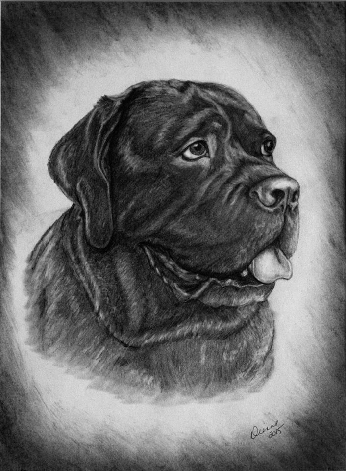 Pencil Dog Portrait 3