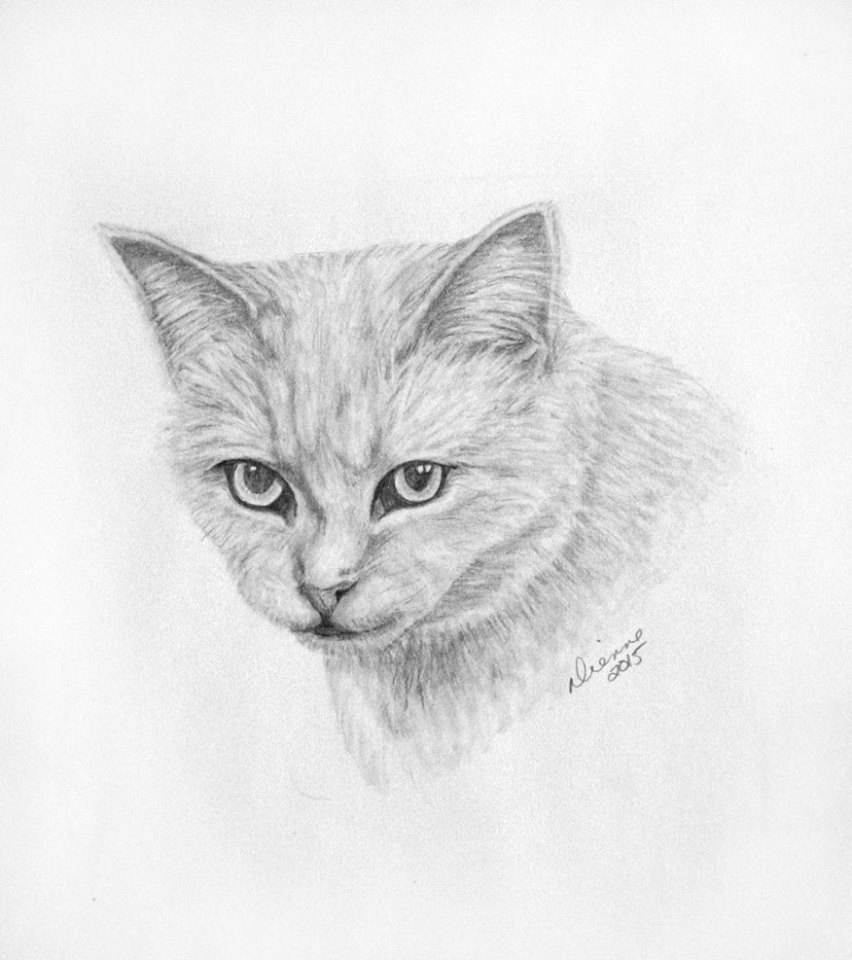 Pencil Cat Portrait 2