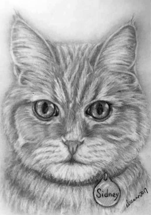 Pencil Cat Portrait 7