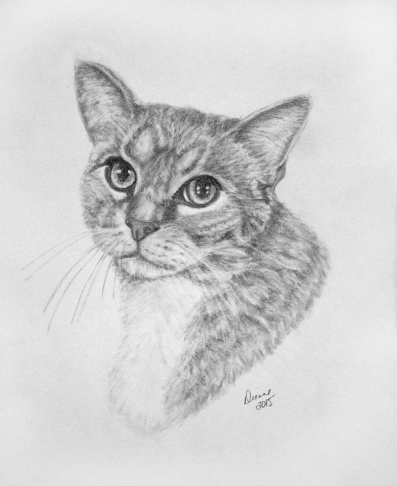 Pencil Portrait Cat 3
